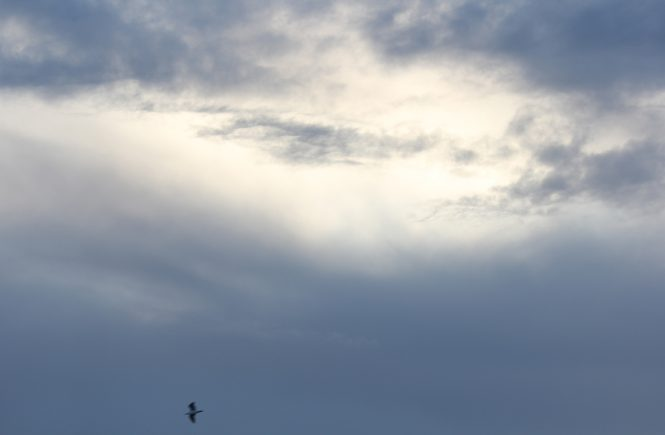 Photo of a bird in the sky, by Susie.